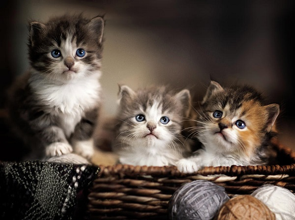 Tổng hợp 500 hình ảnh mèo cute, dễ thương, yêu ngay từ cái nhìn đầu tiên