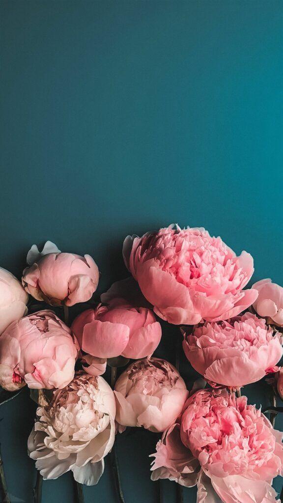Kho1001+ Hình Nền Hoa Mẫu đơn đẹp Mang Lại May Mắn
