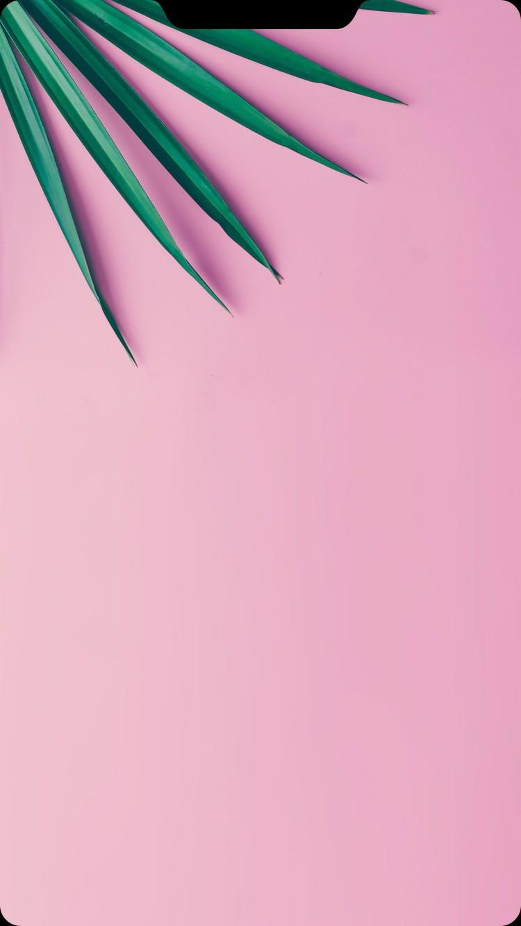 Top 500 Hình Nền Tai Thỏ Iphone đẹp Ngất Ngây được Tuyển Chọn 14