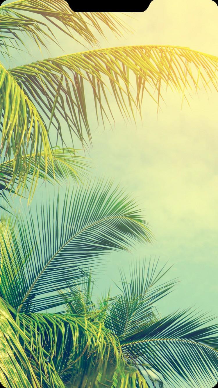 Top 500 Hình Nền Tai Thỏ Iphone đẹp Ngất Ngây được Tuyển Chọn 7
